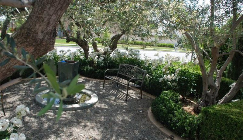 CA Olive Trees - Olive Trees | Olive Trees For Sale | SWG Olive Trees